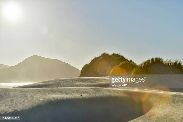 New Zealand, Golden Bay, Wharariki Beach, wind patterns and reflections in a sand dune