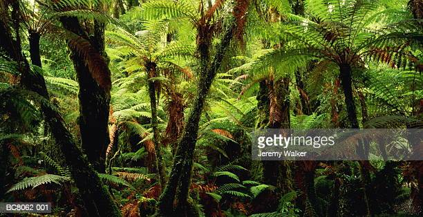 New Zealand, South Island, dense temperate rainforest