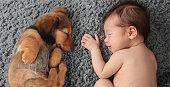 Newborn baby girl sleeping next to a dachshund puppy.