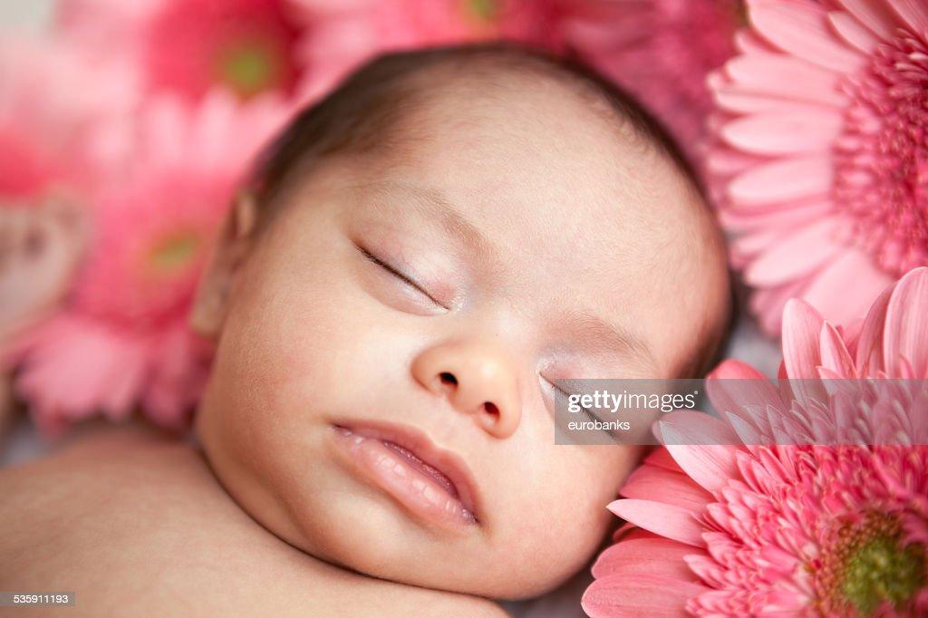 Newborn baby girl sleeping with daisies : Stock Photo