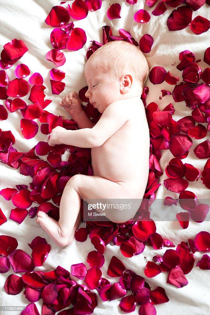 Newborn baby sleeping on rose petals bed : Stock Photo