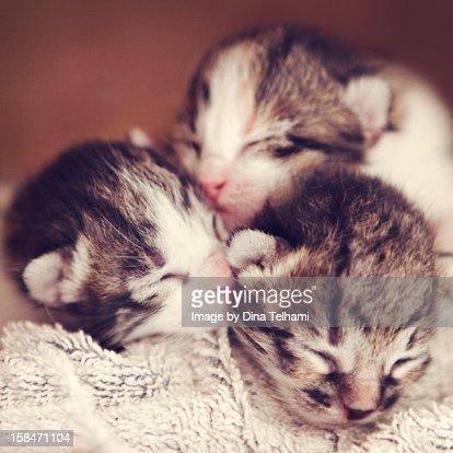 Newborn Kittens : Stock-Foto