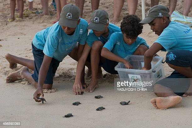 Newborn sea turtles are released by members of the Tamar Project at their headquarters in Praia do Forte Bahia state Brazil on December 13 2013 The...