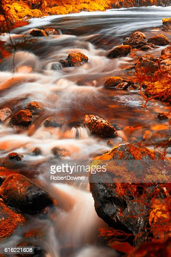 Newell Creek in Tasmania : Stock Photo