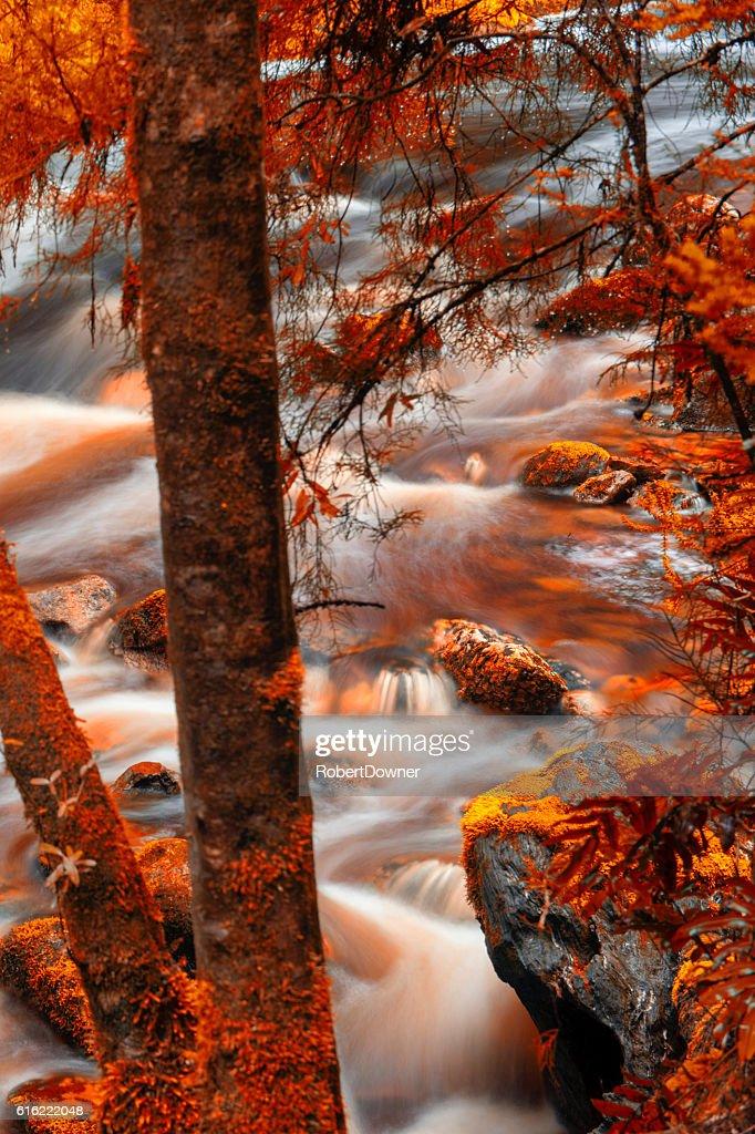 Newell Creek in Tasmania : Stock Photo