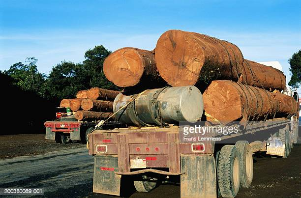 Newly hewn logs on trucks