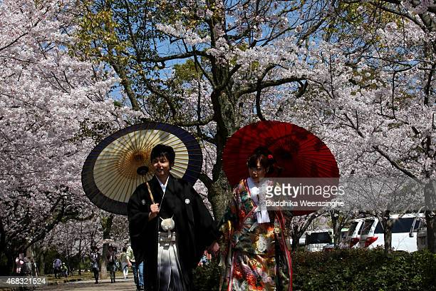 A newly married Japanese couple poses for a photograph as they enjoy cherry blossoms in full bloom at Himeji on April 2 2015 in Himeji Japan There...
