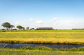 Newly mowed grassland in the foreground with a modern farm with cows in the background. The photo was taken on a sunny day in the Alblasserwaard, a Dutch polder area in the province of South Holland.