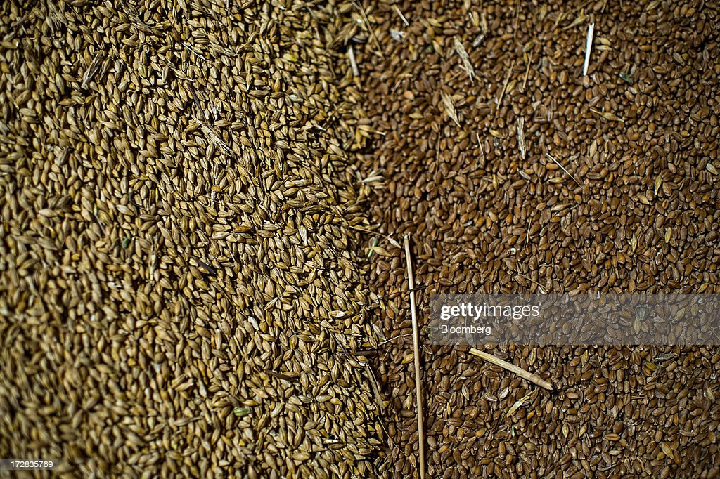 Newly-harvested barley grain, left, sits in a warehouse beside wheat grain in Cervera, Spain, on Thursday, July 4, 2013. Spain consumes about 28 million to 30 million tons of grain a year, of which two-thirds is produced domestically, according to young farmers organization Asaja. Photographer: David Ramos/Bloomberg via Getty Images