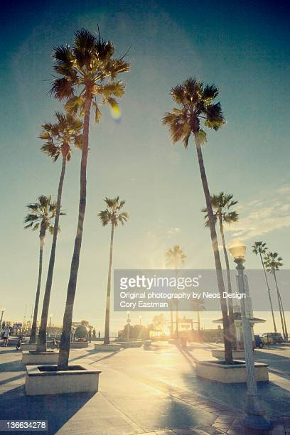 Newport beach with palm trees