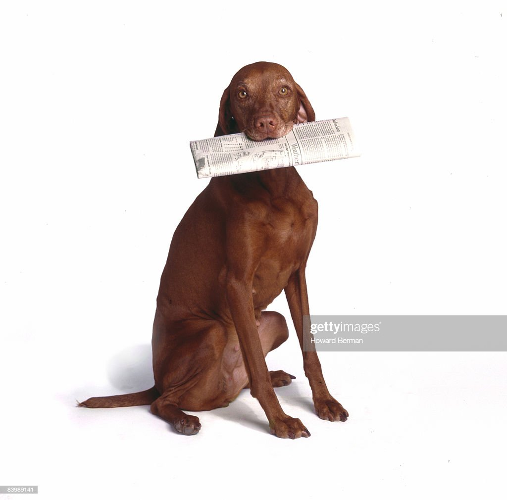 Newspaper Dog : Stock Photo