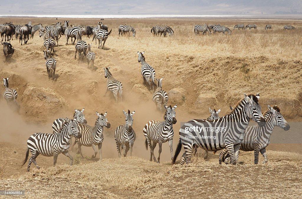 Ngorongoro Crater Conservation area, Tanzania : Stock Photo