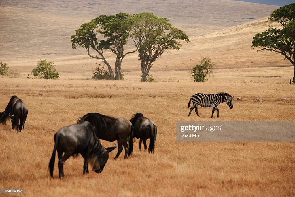 Ngorongoro Crater, Tanzania : Stock Photo