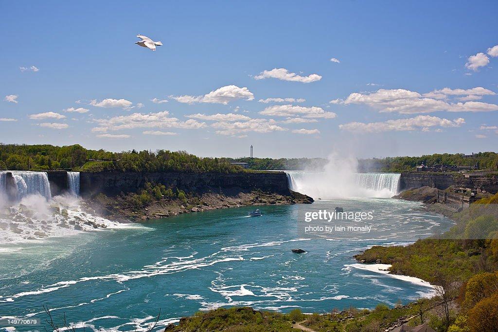 Niagara falls and seagull
