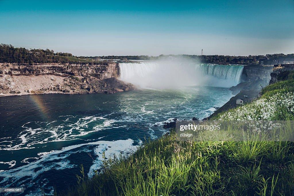 Niagara falls with dandelion flowers at daytime