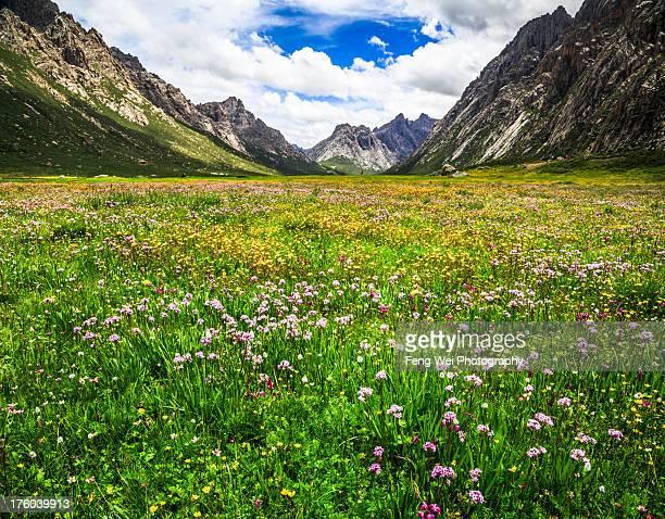 Nianbaoyuze National Geopark, Qinghai China