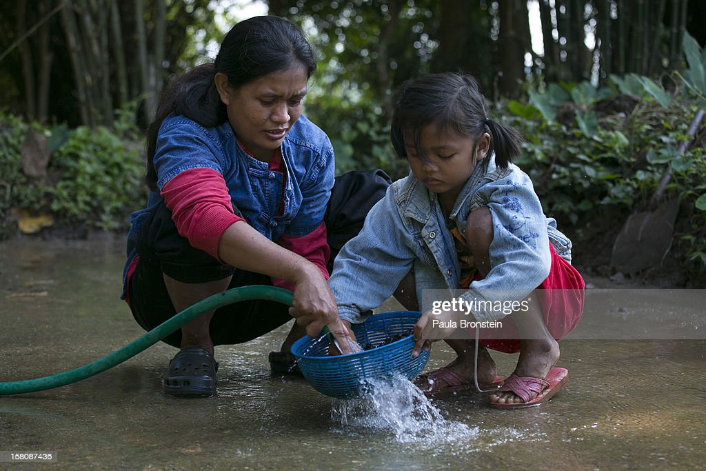 Niang, a mahout's wife and her daughter Ari, 6, wash the coffee beans after picking them from the dung at an elephant camp at the Anantara Golden Triangle resort on December 10, 2012 in Golden Triangle, northern Thailand. Black Ivory Coffee, started by Canadian coffee expert Blake Dinkin, is made from Thai arabica hand picked beans. The coffee is created from a process whereby coffee beans are naturally refined by a Thai elephant. It takes about 15-30 hours for the elephant to digest the beans, and later they are plucked from their dung and washed and roasted. Approximately 10,000 beans are picked to produce 1kg of roasted coffee. At USD 1,100 per kilogram or USD 500 per pound, the cost per serving of the elephant coffee equals USD 50, making the exotic new brew the world's priciest. It takes 33 kilograms of raw coffee cherries to produce 1 kilo of Black Ivory Coffee.