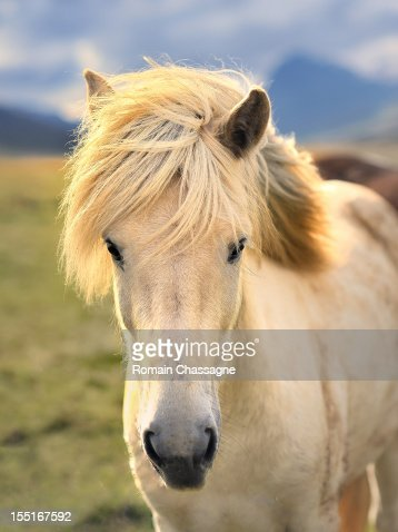Nice blond hair : Stock Photo
