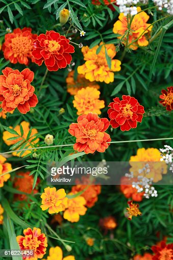 Nice Orange Flowers : Stock Photo