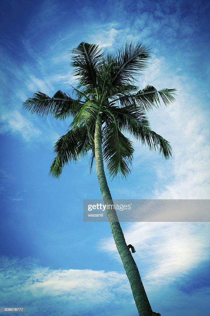 Schöne Palmen in der blauen sonnigen Himmel : Stock-Foto