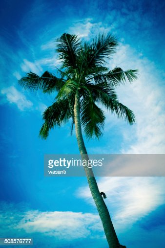 nice palm trees in the blue sunny sky : Stock Photo