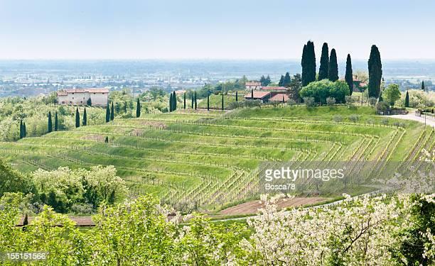 Bel paesaggio del vigneto Collio, Friuli Venezia Giulia, Italia