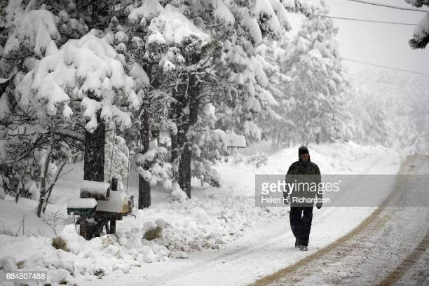 Nicholas Emery walks down snowy Ridge Road where more than 18 inches of snow has fallen in less than 24 hours on May 18 2017 in Nederland Colorado Up...