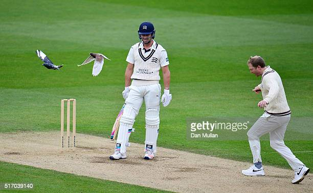 Nick Compton of Middlesex looks on as Gareth Batty of Surrey clears two pigeons off the wicket during day two of the preseason friendly between...