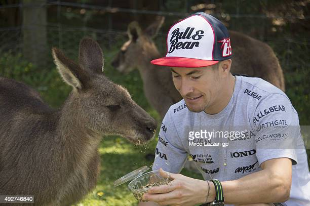 Nicky Hayden of USA and Aspar Team MotoGP jokes with Kangaroos during a preevent at the Maru Koala Park ahead of the 2015 MotoGP of Australia at...