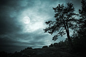 Black silhouette of pine tree in night forest under dramatic cloudy sky with full moon. Blue toned stylized photo