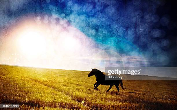 Night Mare - Horse galloping across field