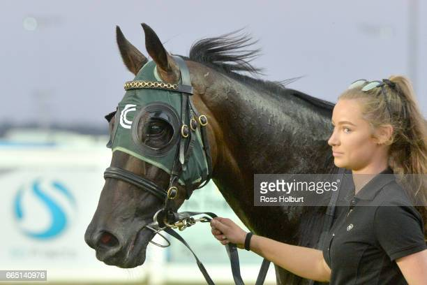 Night Sight after winning XXXX Gold Maiden Plate at Racingcom Park Racecourse on April 06 2017 in Pakenham Australia