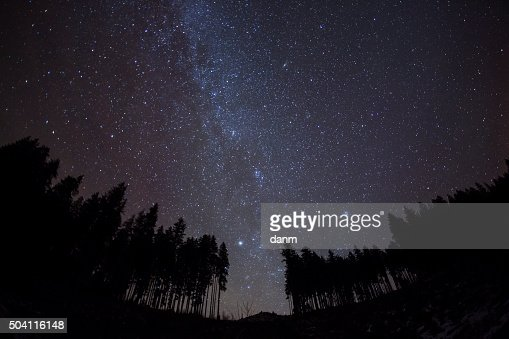 Night sky with stars and trees