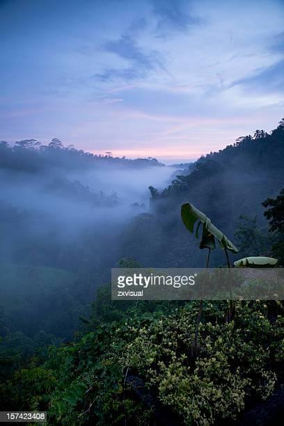 Nightfall in Ubud Bali