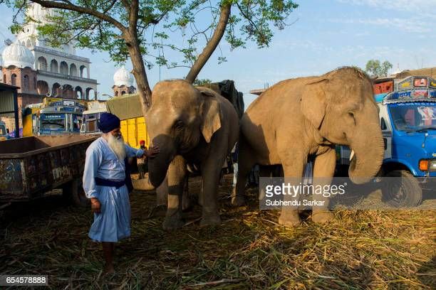 Nihang Sikh looks after elephants at a camp during Hola Mohalla festival Hola Mohalla is a threeday festival started by the tenth Sikh Guru Govind...
