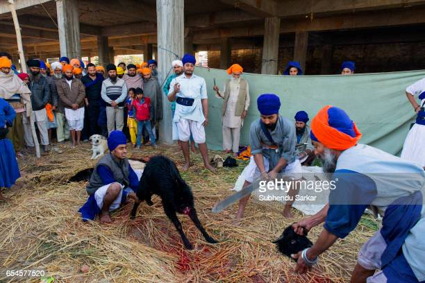 A Nihang Sikh offers animal sacrifice at a camp during Hola Mohalla festival Hola Mohalla is a threeday festival started by the tenth Sikh Guru...