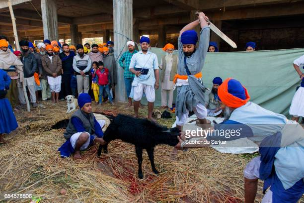 Nihang Sikh offers animal sacrifice at a camp during Hola Mohalla festival Hola Mohalla is a threeday festival started by the tenth Sikh Guru Govind...