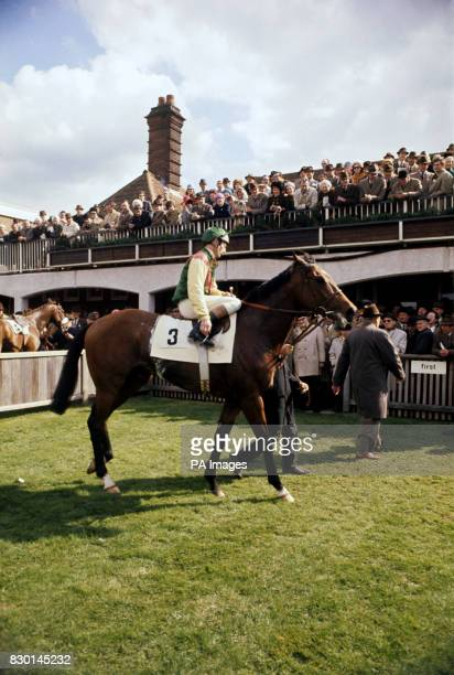Nijinsky with Lester Piggott in the winner's enclosure after his victory in the 2000 Guineas Stakes at Newmarket