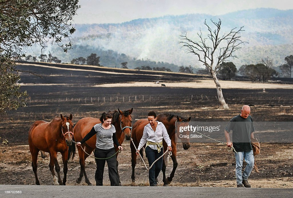 Nikki Hellyer, Michelle Ripper and Trevor Ripper walk with their horses that went missing during the fire on January 19, 2013 in Melbourne, Australia. Bushfires in Victoria have claimed one life and destroyed several houses. Record heat continues to create extreme fire conditions throughout Australia.
