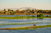 Nile River side of the pastoral scenery