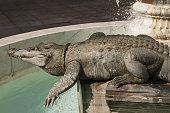 Nimes, crocodile fountain
