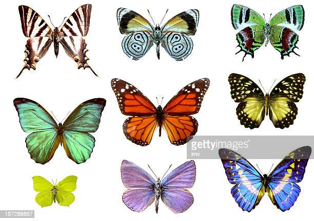 Nine colorful butterflies