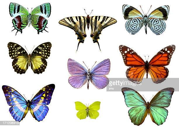 Nine Colourful Detailed Butterflies on a White Background