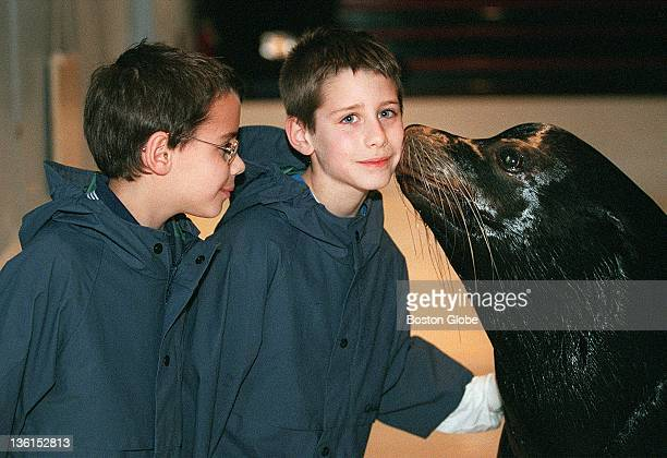 Nineyearold Sam Files watches as his twin brother Nathan gets a kiss from Tyler a 736 lb sea lion at the New England Aquarium