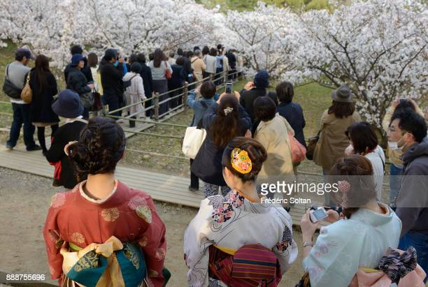 Ninnaji temple in Kyoto Japanese women wearing kimonos at Ninnaji the head temple of the Omuro school of the Shingon Sect of Buddhism Founded in AD...