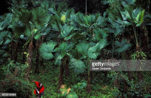 Nishi woman in the jungle on February 13 1996 near Cherrapunji the rainiest place on Earth in Arunachal Pradesh India Covered hills of an...