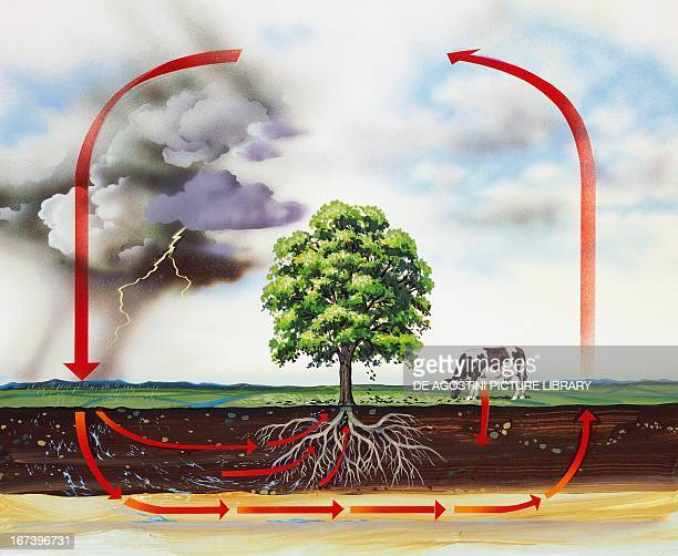 Nitrogen cycle biogeochemical cycle by which nitrogen naturally circulates between the atmosphere soil and living things Drawing