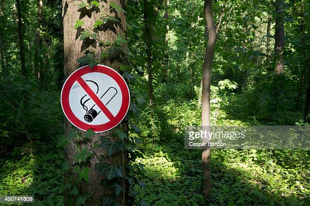 A no smoking sign posted on a tree trunk in a wooded area