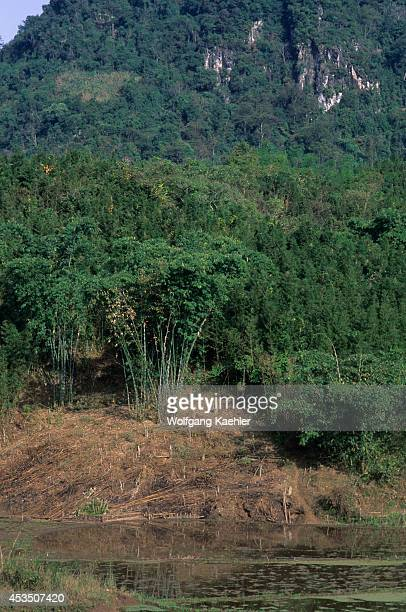 No Vietnam Near Hoa Binh Giang Mo Village Muong Hill Tribe Bamboo Forest