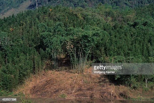 No Vietnam Near Hoa Binh Giang Mo Village Muong Hilltribe Bamboo Forest